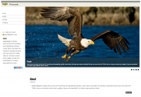 Eagle Photography Template